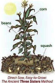 Garden Update - An Israelites Garden